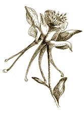 element-flower
